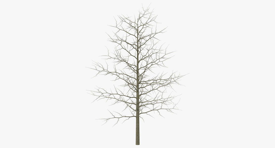 Winter Trees Collection 5 royalty-free 3d model - Preview no. 39