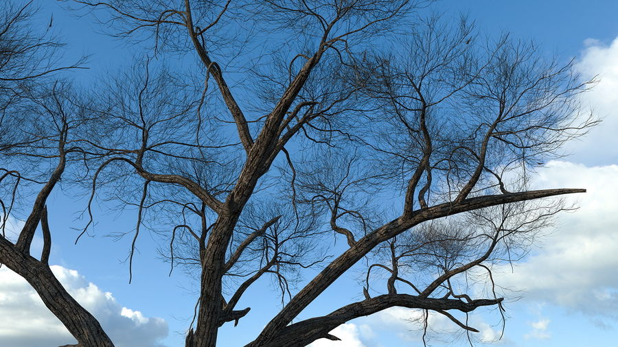Winter Trees Collection 5 royalty-free 3d model - Preview no. 23