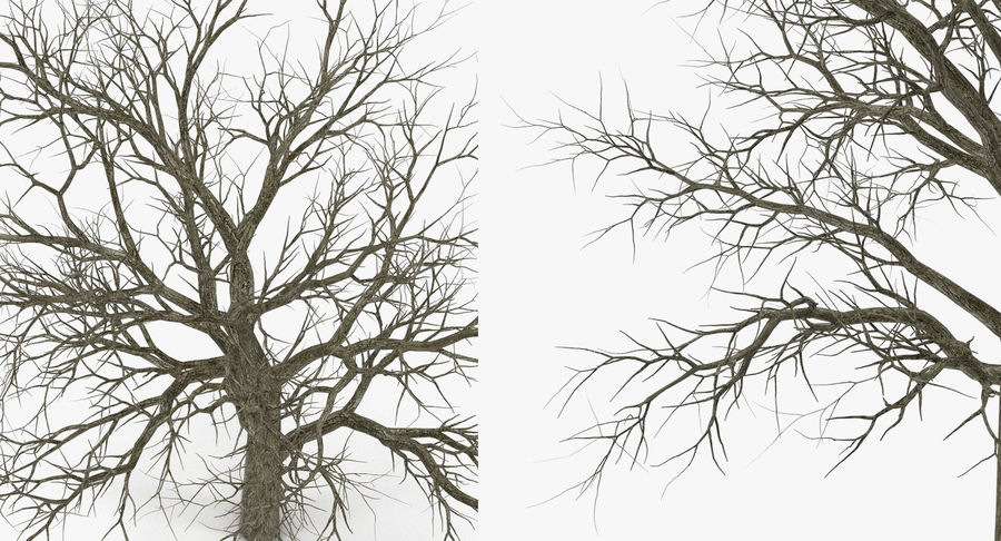 Winter Trees Collection 5 royalty-free 3d model - Preview no. 54