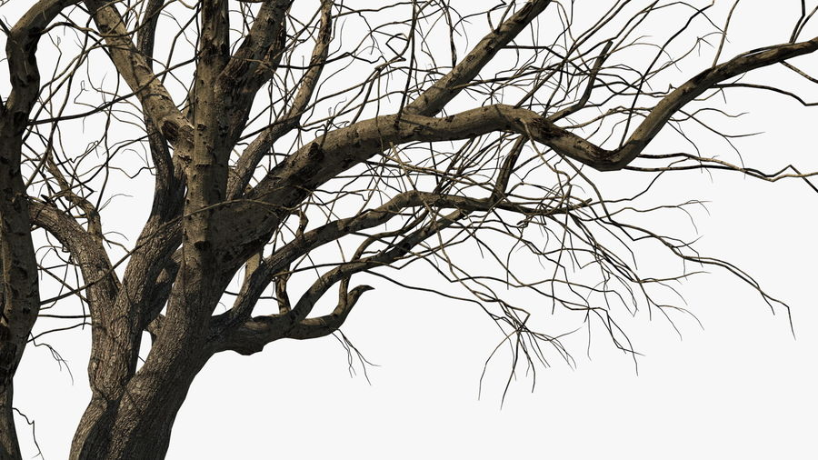 Winter Trees Collection 5 royalty-free 3d model - Preview no. 12