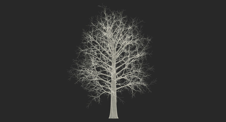 Winter Trees Collection 5 royalty-free 3d model - Preview no. 62