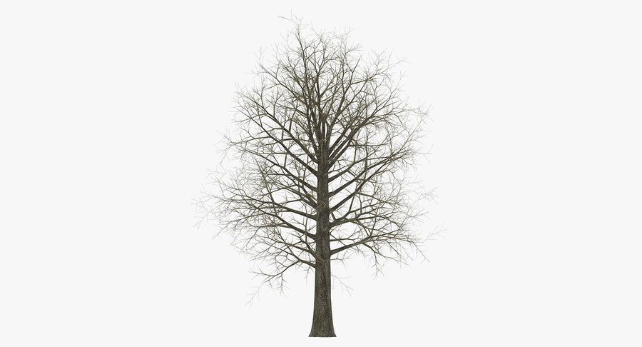 Winter Trees Collection 5 royalty-free 3d model - Preview no. 37