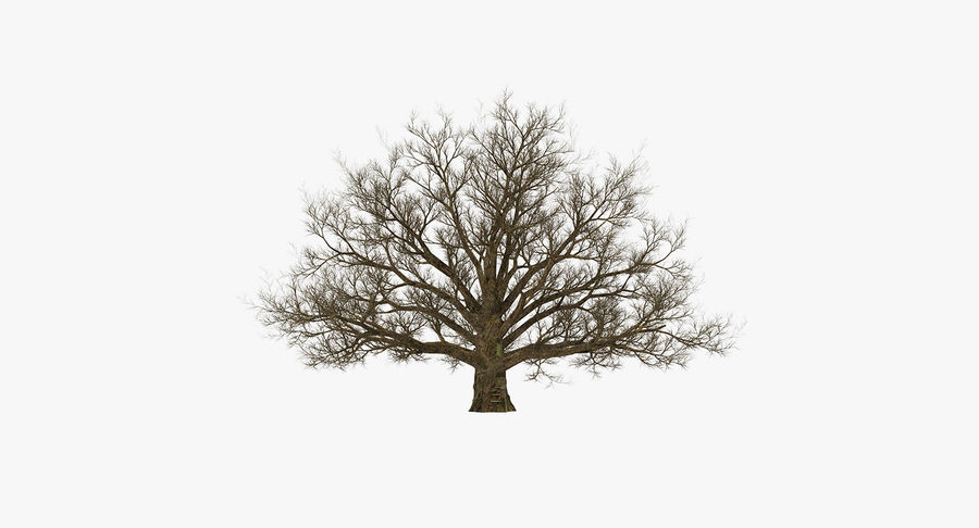 Winter Trees Collection 5 royalty-free 3d model - Preview no. 51