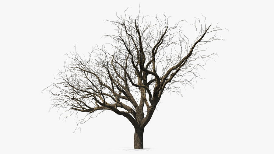 Winter Trees Collection 5 royalty-free 3d model - Preview no. 6