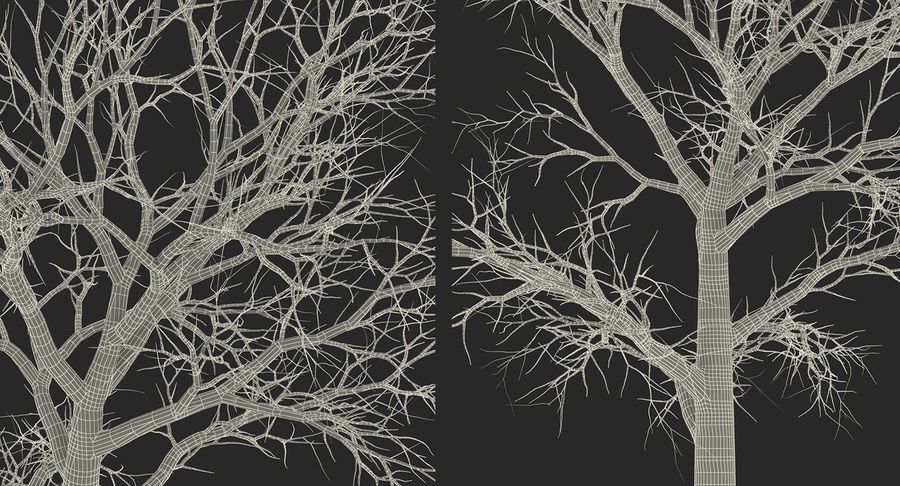 Winter Trees Collection 5 royalty-free 3d model - Preview no. 70