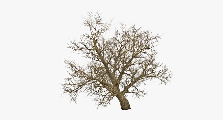 Winter Trees Collection 5 royalty-free 3d model - Preview no. 41
