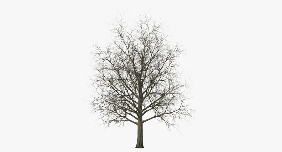 Winter Trees Collection 5 royalty-free 3d model - Preview no. 47