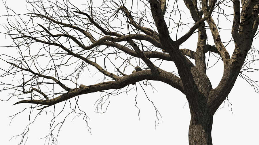 Winter Trees Collection 5 royalty-free 3d model - Preview no. 10