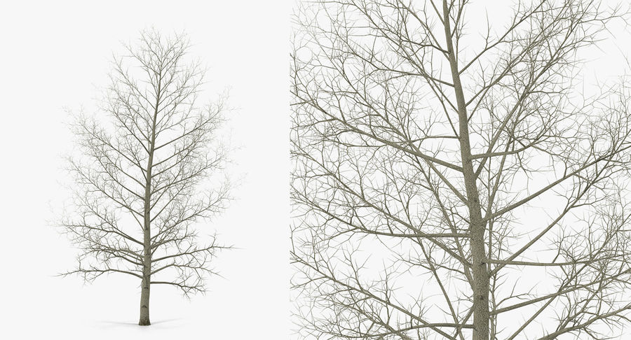 Winter Trees Collection 5 royalty-free 3d model - Preview no. 44