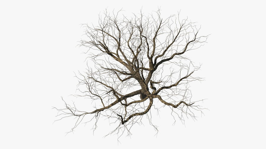 Winter Trees Collection 5 royalty-free 3d model - Preview no. 8