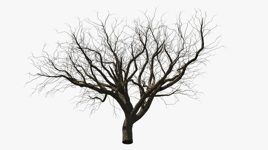 Winter Trees Collection 5 royalty-free 3d model - Preview no. 1