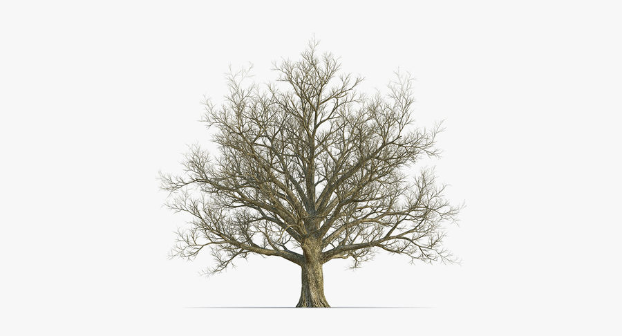 Winter Trees Collection 5 royalty-free 3d model - Preview no. 33