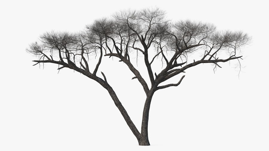 Winter Trees Collection 5 royalty-free 3d model - Preview no. 22