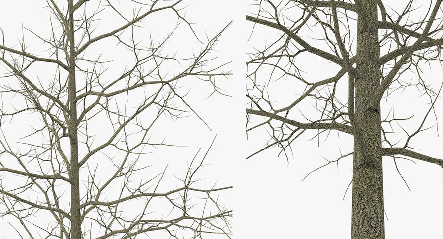 Winter Trees Collection 5 royalty-free 3d model - Preview no. 40