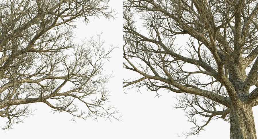 Winter Trees Collection 5 royalty-free 3d model - Preview no. 34
