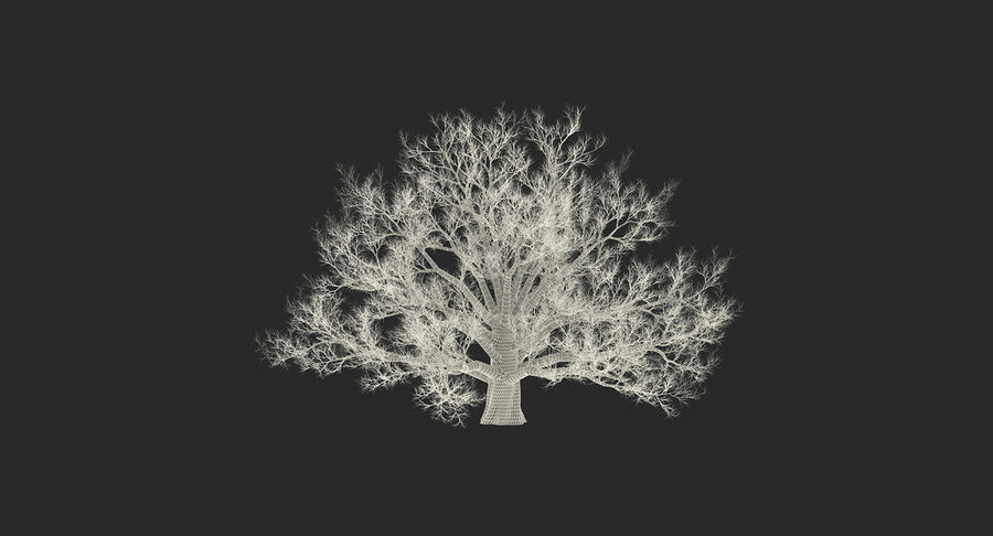 Winter Trees Collection 5 royalty-free 3d model - Preview no. 69