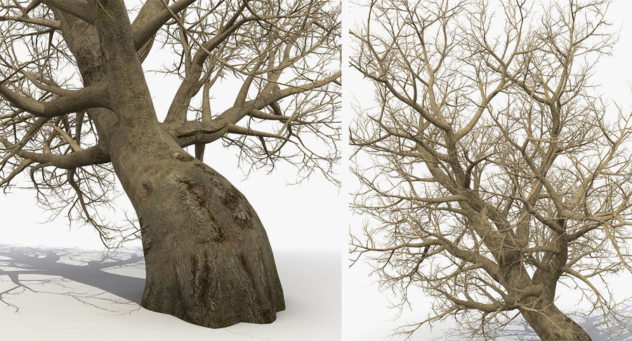 Winter Trees Collection 5 royalty-free 3d model - Preview no. 42
