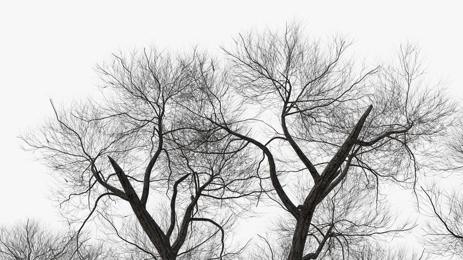 Winter Trees Collection 5 royalty-free 3d model - Preview no. 31
