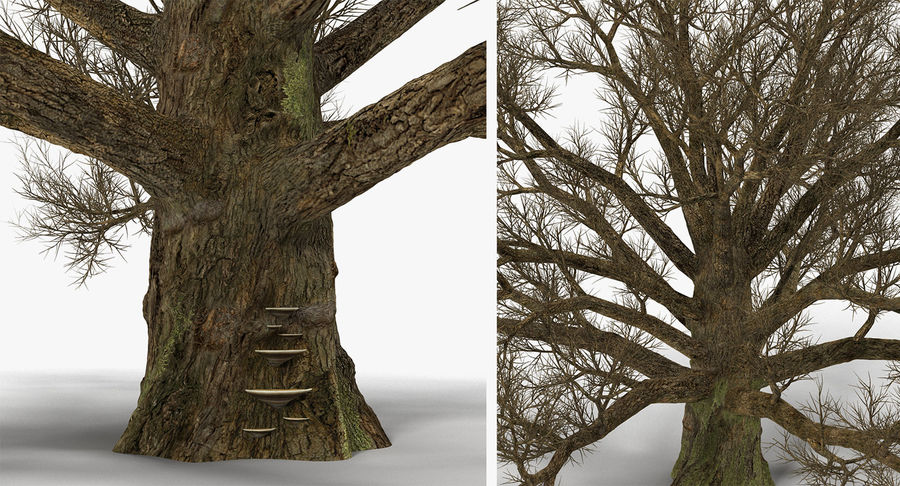 Winter Trees Collection 5 royalty-free 3d model - Preview no. 52