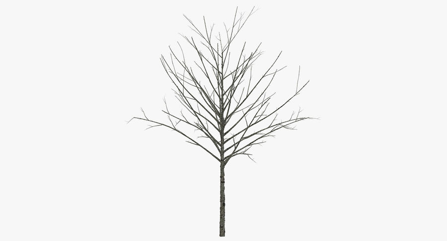 Winter Trees Collection 5 royalty-free 3d model - Preview no. 49