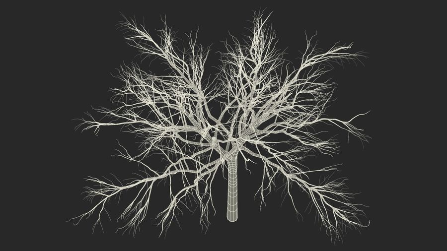 Winter Trees Collection 5 royalty-free 3d model - Preview no. 58