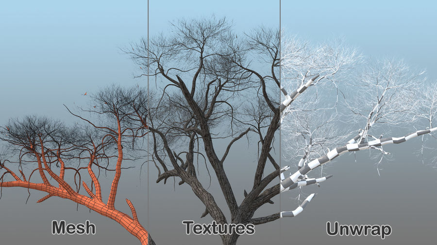 Winter Trees Collection 5 royalty-free 3d model - Preview no. 26