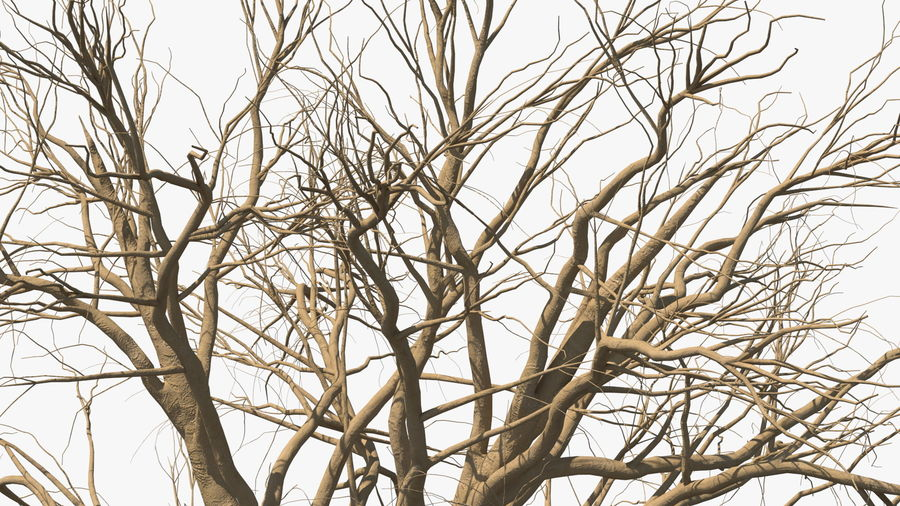 Winter Trees Collection 5 royalty-free 3d model - Preview no. 21
