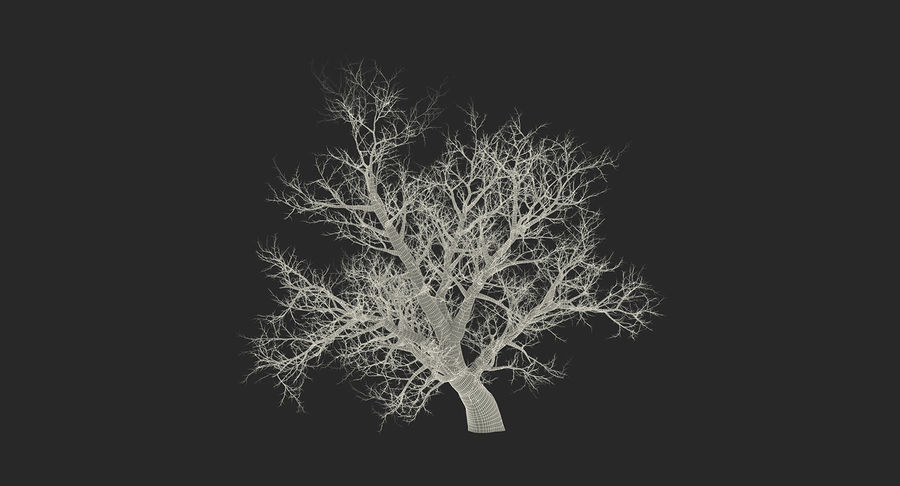 Winter Trees Collection 5 royalty-free 3d model - Preview no. 64