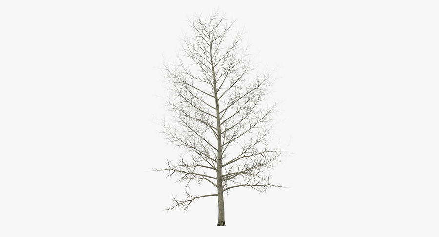 Winter Trees Collection 5 royalty-free 3d model - Preview no. 43