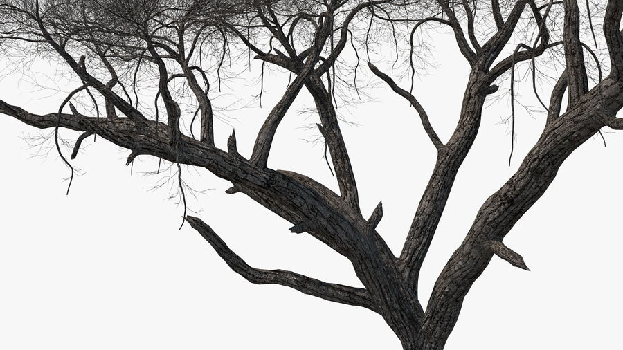 Winter Trees Collection 5 royalty-free 3d model - Preview no. 32