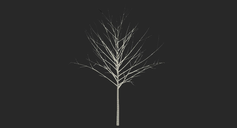 Winter Trees Collection 5 royalty-free 3d model - Preview no. 68