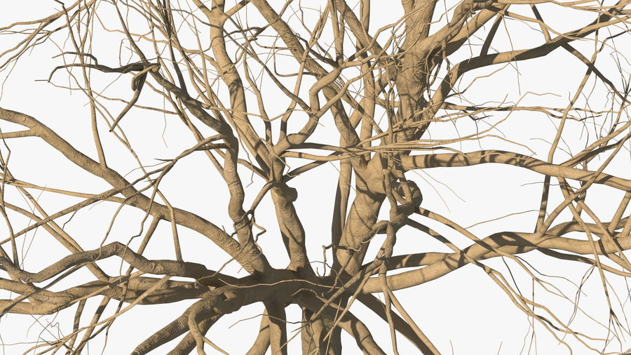 Winter Trees Collection 5 royalty-free 3d model - Preview no. 20