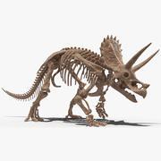 Triceratops Skeleton Fossil Rigged for Cinema 4D 3d model