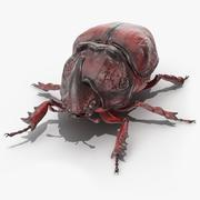 Oryctes Nasicornis Rhinoceros Beetle Standing 3d model