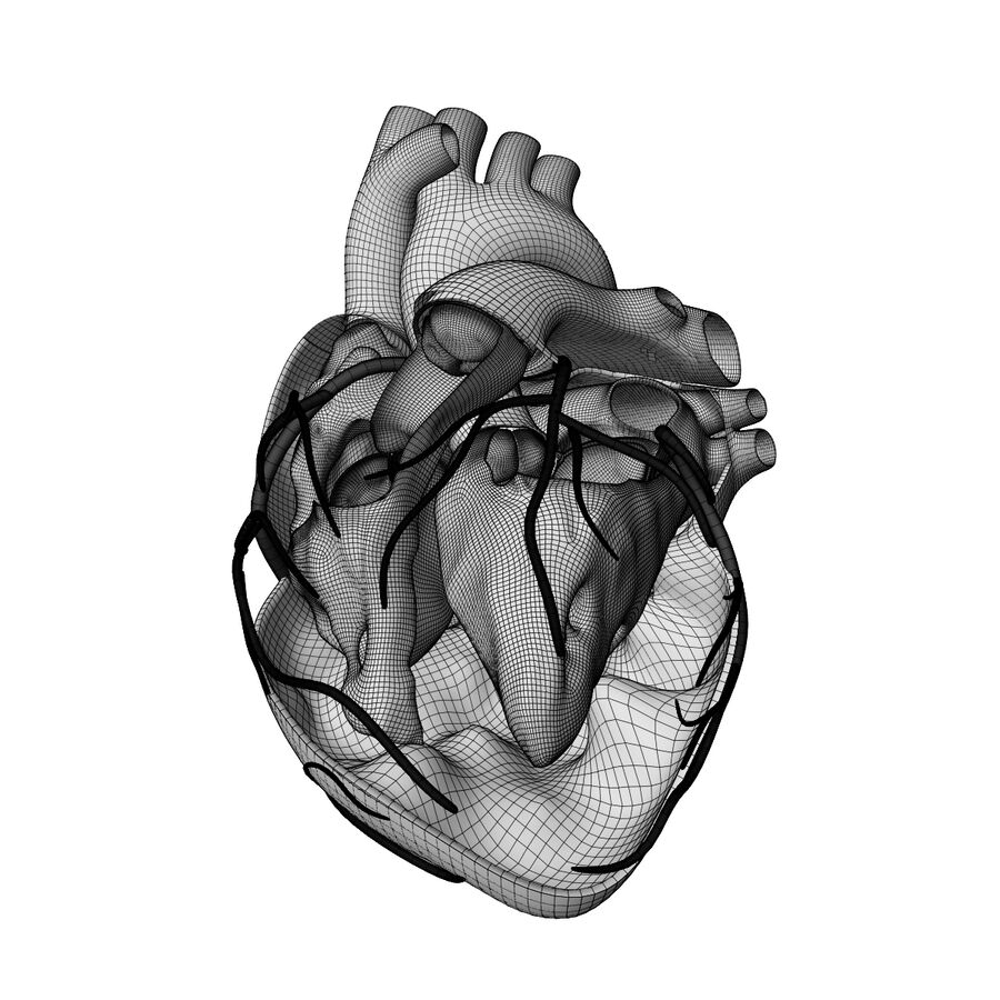 Human Heart Anatomy royalty-free 3d model - Preview no. 11