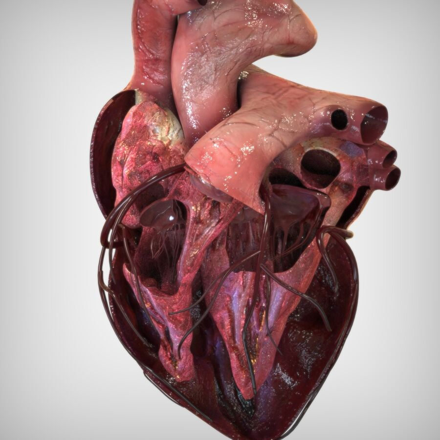 Human Heart Anatomy royalty-free 3d model - Preview no. 3