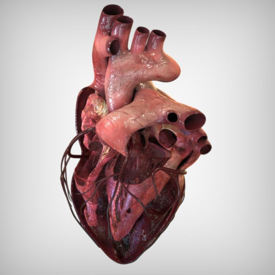 Human Heart Anatomy royalty-free 3d model - Preview no. 4