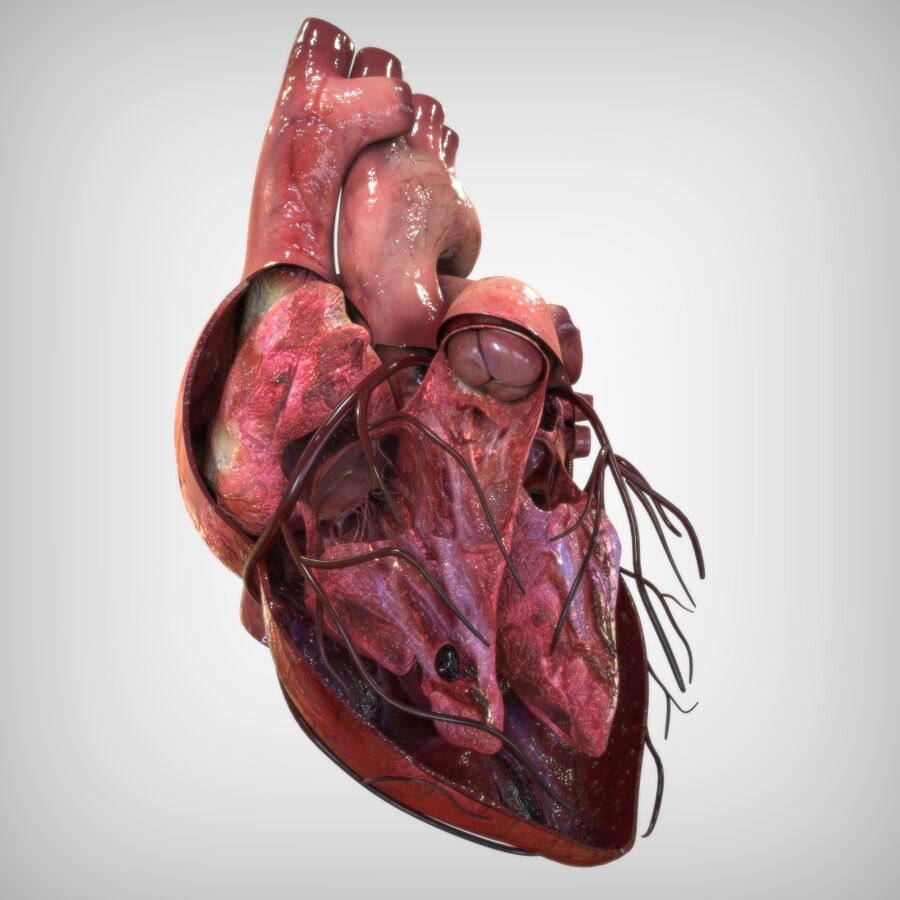 Human Heart Anatomy royalty-free 3d model - Preview no. 5