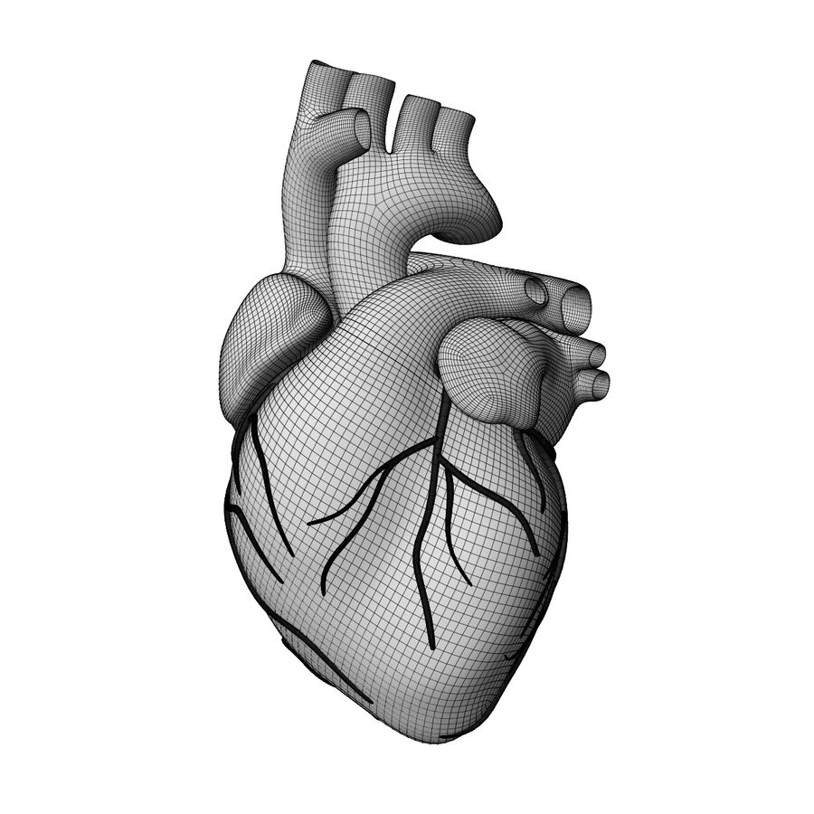 Human Heart Anatomy royalty-free 3d model - Preview no. 12
