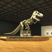 Museo dei dinosauri 3d model