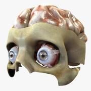Öga och hjärna 3d model