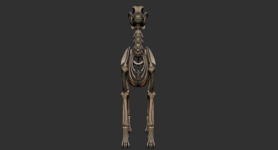 Meksikalı Tüysüz Köpek Anatomisi ve İskeleti royalty-free 3d model - Preview no. 39