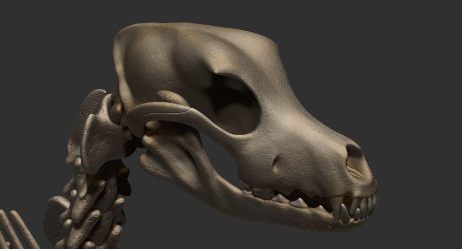 Meksikalı Tüysüz Köpek Anatomisi ve İskeleti royalty-free 3d model - Preview no. 51