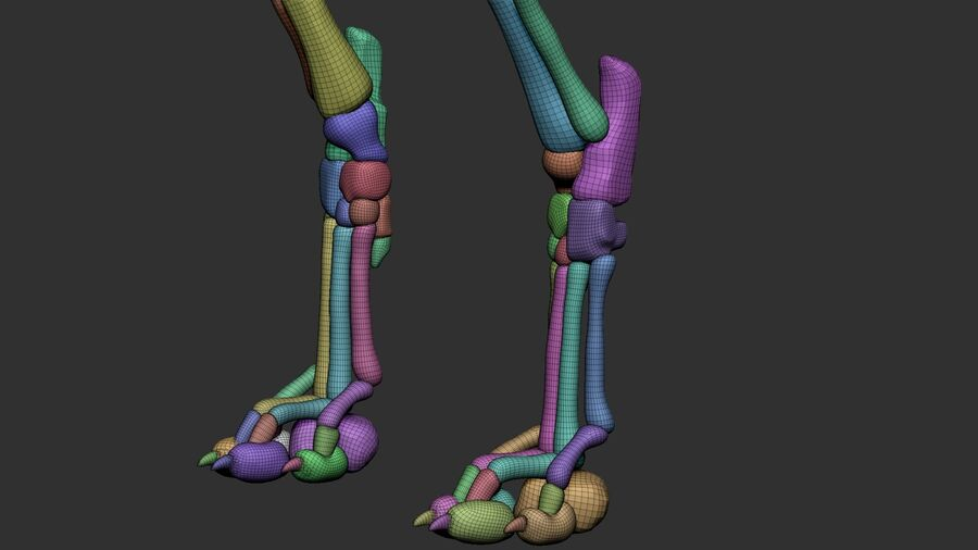 Meksikalı Tüysüz Köpek Anatomisi ve İskeleti royalty-free 3d model - Preview no. 54