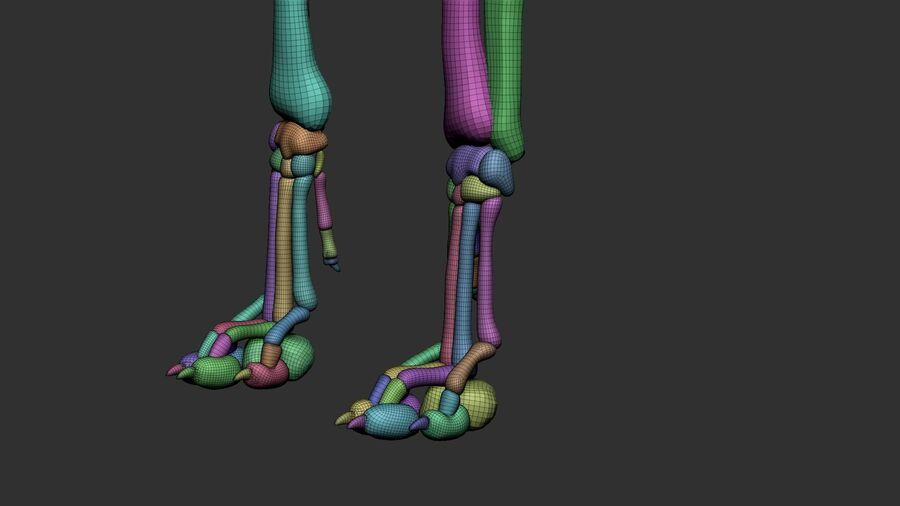 Meksikalı Tüysüz Köpek Anatomisi ve İskeleti royalty-free 3d model - Preview no. 55