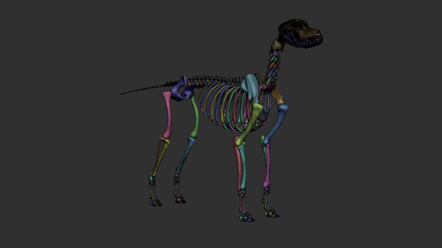 Meksikalı Tüysüz Köpek Anatomisi ve İskeleti royalty-free 3d model - Preview no. 37