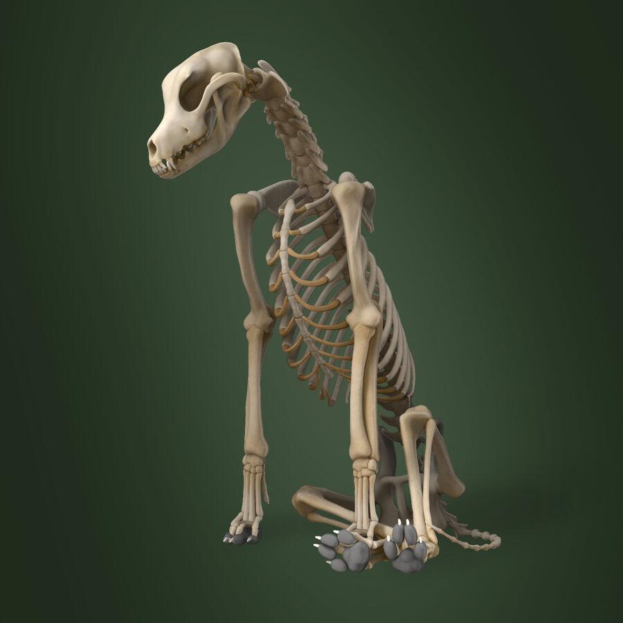 Meksikalı Tüysüz Köpek Anatomisi ve İskeleti royalty-free 3d model - Preview no. 12