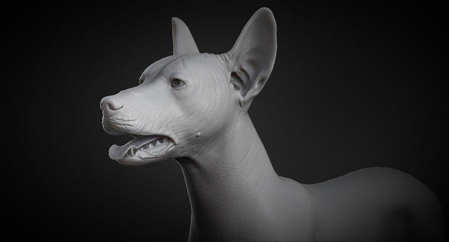 Meksikalı Tüysüz Köpek Anatomisi ve İskeleti royalty-free 3d model - Preview no. 3