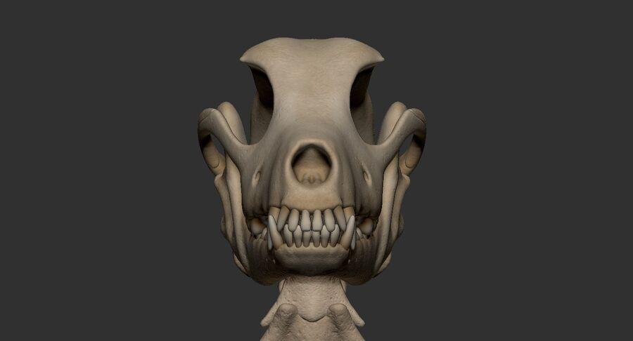 Meksikalı Tüysüz Köpek Anatomisi ve İskeleti royalty-free 3d model - Preview no. 48