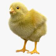 poulet 3d model